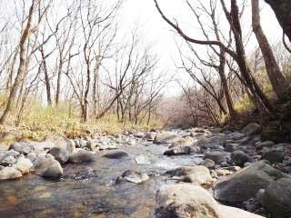 栃木県那須郡-中古戸建て-ログハウス-渓流