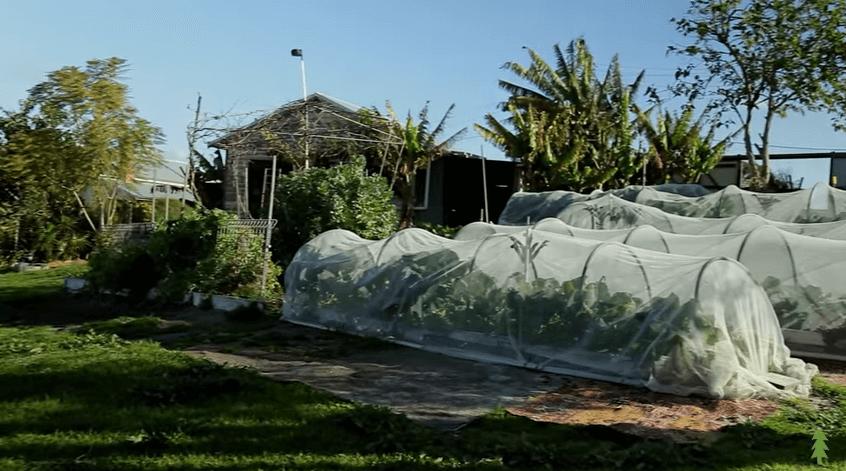 パーマカルチャー農場